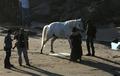 Kristen Stewart watching a horse pee