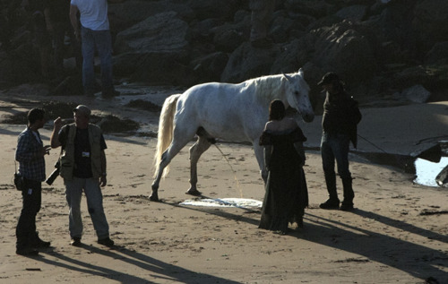 해리 포터 대 트와일라잇 바탕화면 containing a lippizan and a horse wrangler entitled Kristen Stewart watching a horse pee