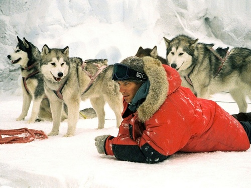 Пол Уокер Обои with a sled dog and a погонщик, каюта, каюр entitled Paul Walker Обои