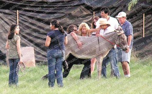 shakira gets donkey