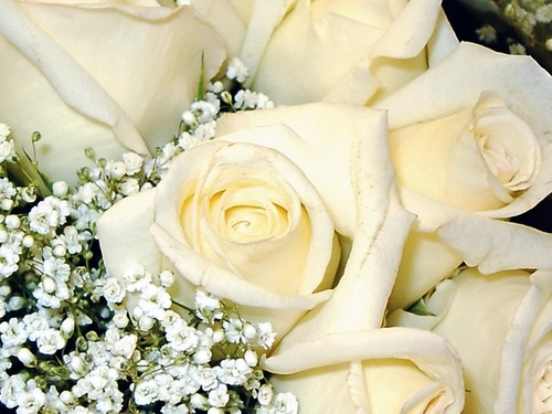 Flowers wallpaper with a bouquet, a rose, and a rose called White Roses