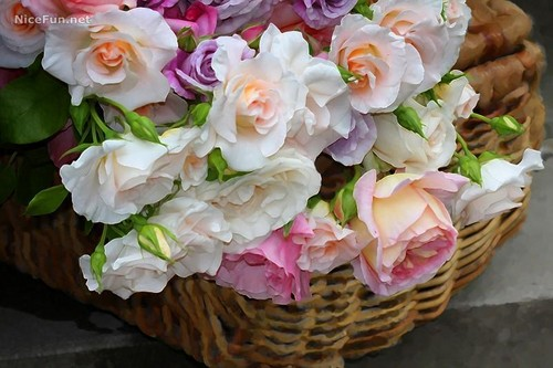A basket full of roses for toi
