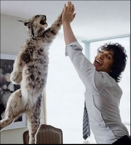 Andy Samberg high fiving a cat