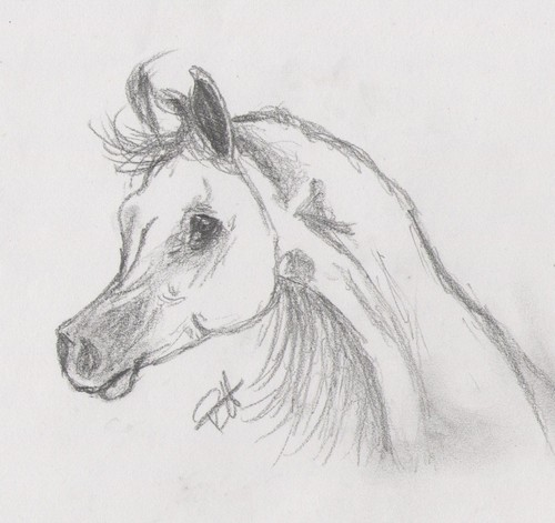 Drawing of an arabian