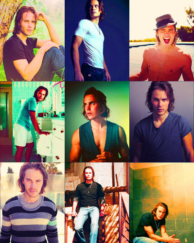 Taylor Kitsch wallpaper probably containing a concert and a sign entitled ►taylor kitsch;