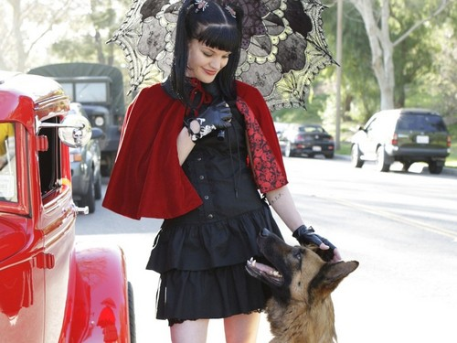 Abby Sciuto wallpaper possibly with a malinois titled Abby Sciuto Wallpaper
