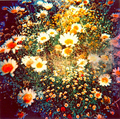 Flowers - hippies photo