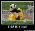 Panda Demotivational - demotivational-posters photo