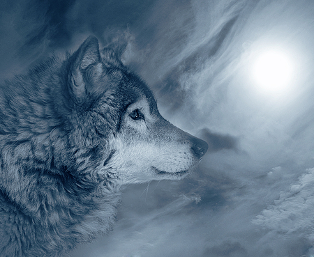wolf wallpaper yorkshire - photo #23