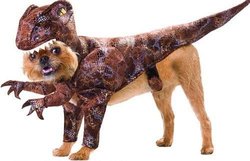 Halloween wallpaper titled ☆ Lizard dog ☆