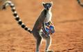 Bad Lemur!!!