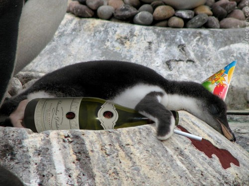 Bad Penguin!!!