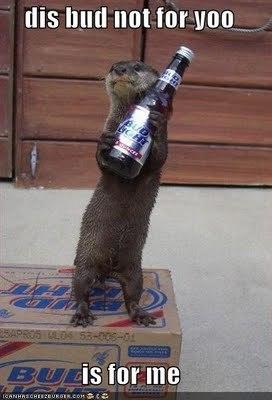 Bad otter!!!