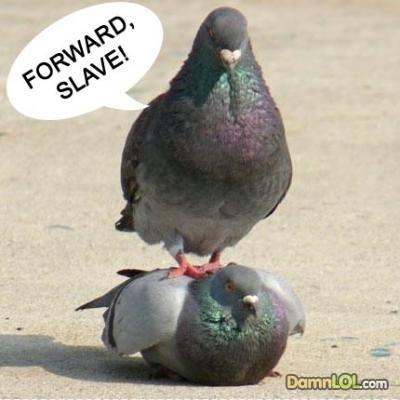 phía trước, chuyển tiếp SLAVE!
