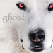 Ghost the Dire Wolf