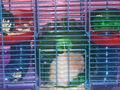میں hamster, ہمزٹر TEDDY