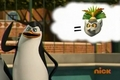 Kowalski is thinking about King Julien