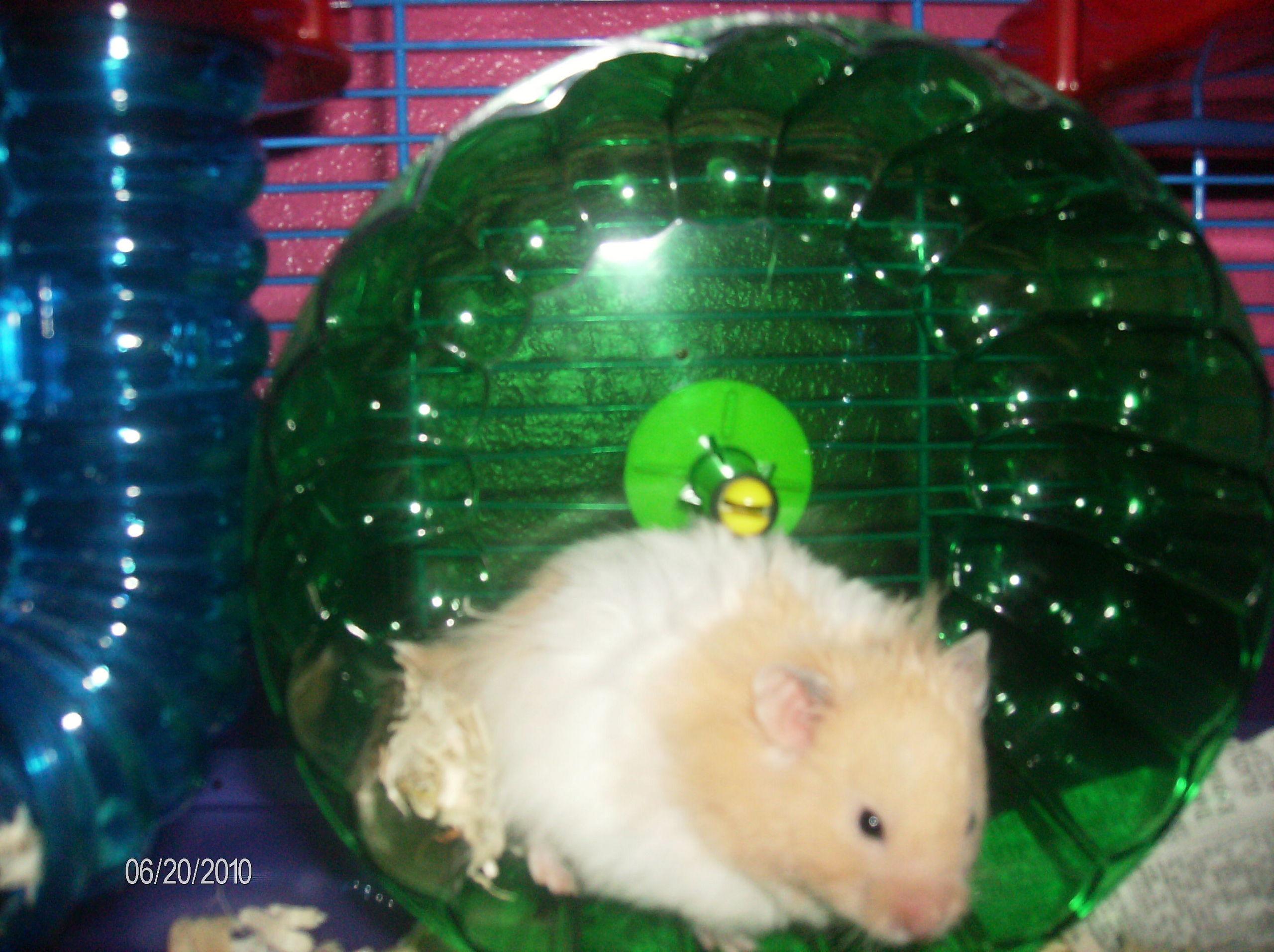 MY TEDDY bär hamster TEDDY