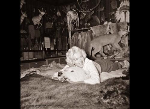 Marilyn, August 1953