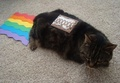 Real Nyan Cat ;) - nyan-cat fan art