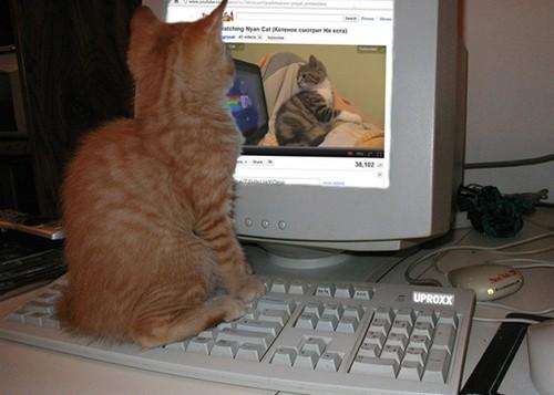 Cat watching Nyan Cat :)