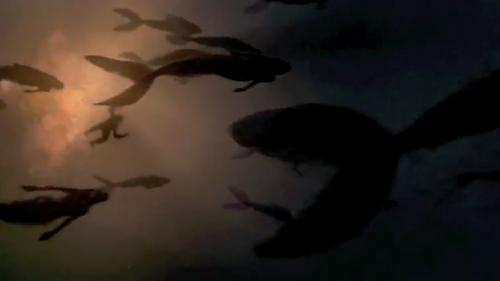 potc 4 mermaids