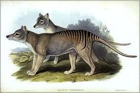 tigerwolf