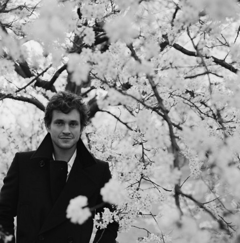 Hugh Dancy wallpaper containing a japanese apricot, a beech, and a japanese plum called ♥HD ♥
