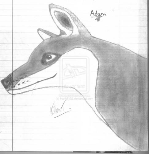 Adam The lobo