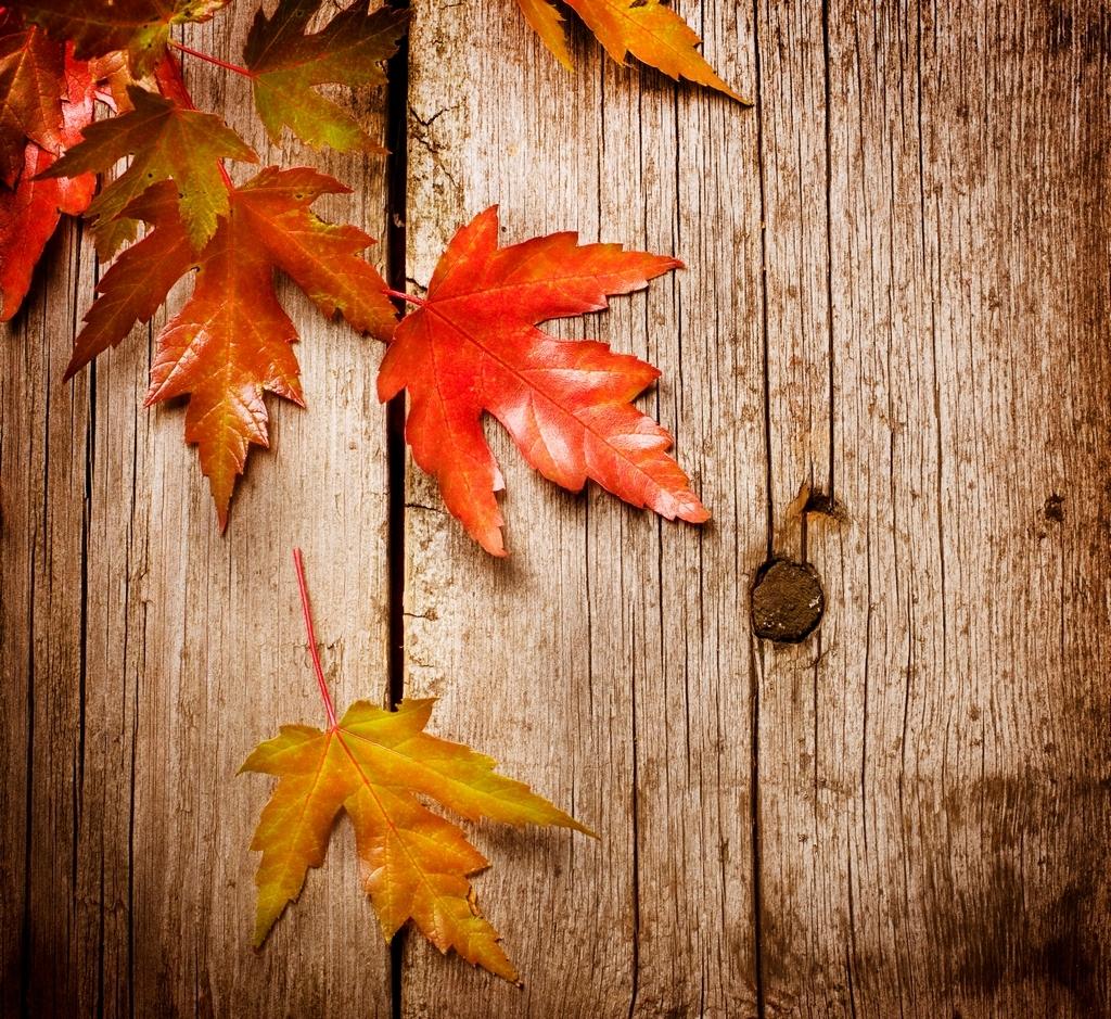 Autumn leaves - Autumn Photo (26117201) - Fanpop