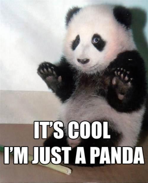 Its cool! im just a panda!