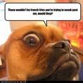 LOL ANIMALS, YAY - mintys-funny-stuff photo