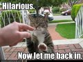 LOL ANIMALS, YAY - mintys-funny-stuff photo