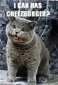 LOL ANIMALS - mintys-funny-stuff photo