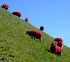 Red Sheep!