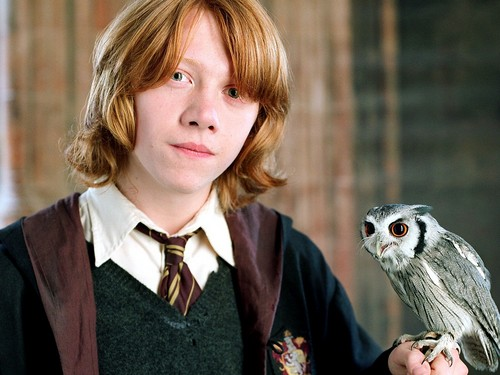Rupert Grint wallpaper possibly with a cockateel, a peregrine, and an owl entitled Rupert Grint wallpaper