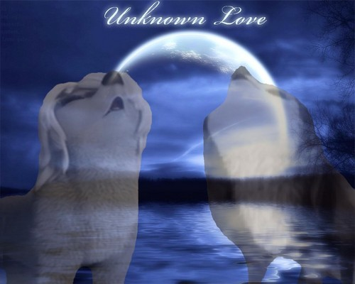 Unknown amor