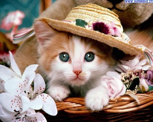 美 Catty