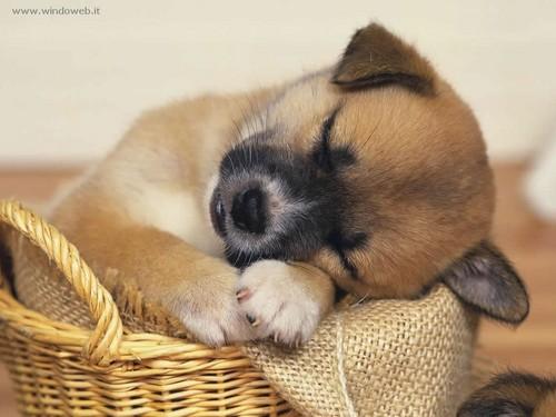 美 Doggy