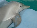 ☆ Winter - dolphin-tale wallpaper