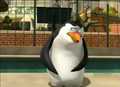Baby Ricie - rico-the-penguin photo