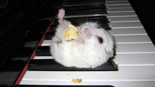 Hamsters wallpaper entitled Cute