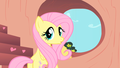My It's Cute  - fluttershy wallpaper