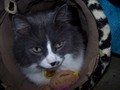 My cat Sonny in his tunnel - fanpop-pets photo