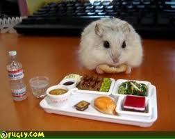The rarest hamster, the HUMAN HAMSTER!