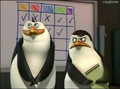 bad bad Ricie - rico-the-penguin photo