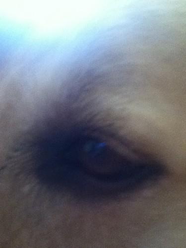 joe jo eye