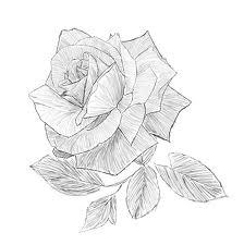 rose mia 2010
