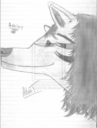 Ashley The Wolf