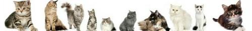 Cat Banner ♥